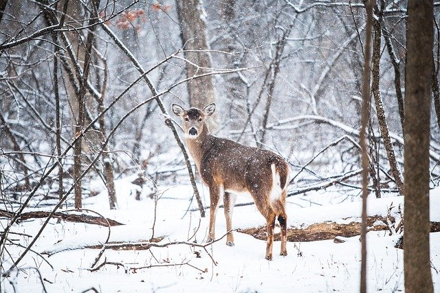 What is the Spiritual Meaning of Deer
