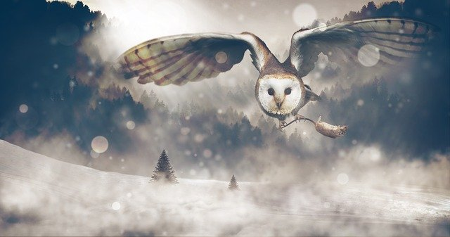 What Is The Spiritual Meaning Of White Owls: Are They Lucky?