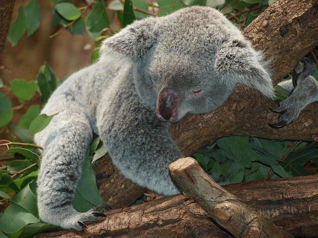 Is Sodalite Good For Sleep?