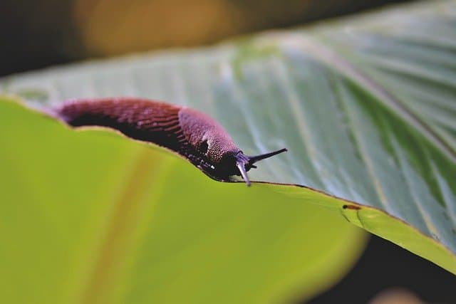 What is the Spiritual Meaning of Slugs?
