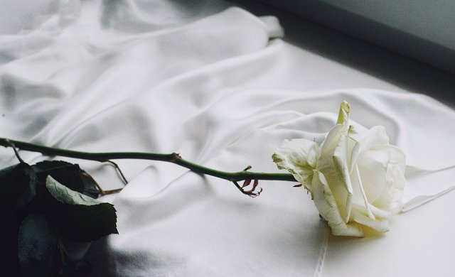 What is the Spiritual Meaning of A White Rose?