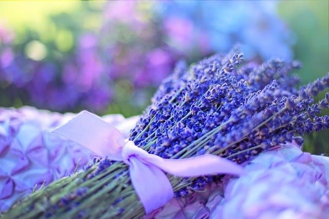 What is the spiritual meaning of lavender?