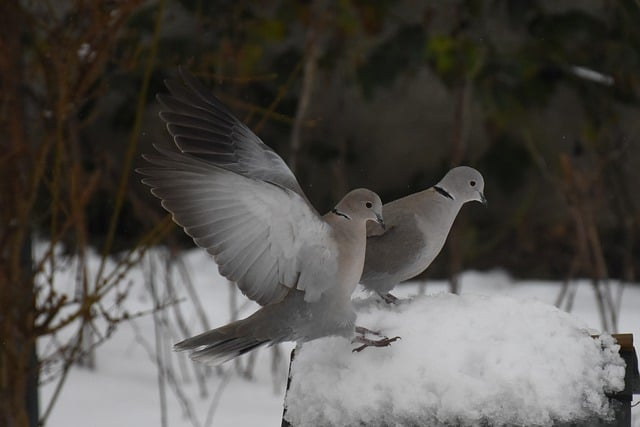 What is the spiritual meaning of a pair of doves? You could be very lucky!