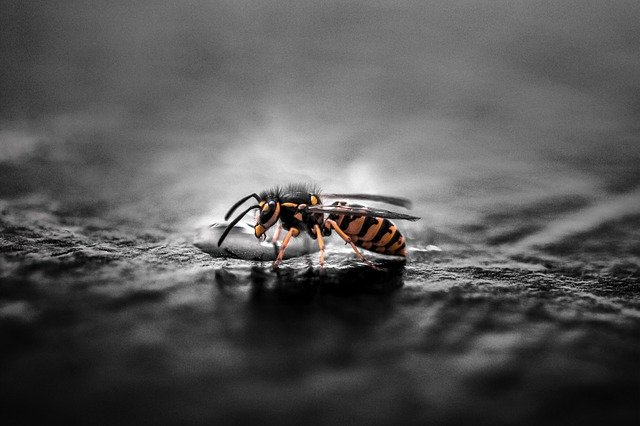What Is the Spiritual Meaning of Wasps? Wasp Symbolism and Secrets