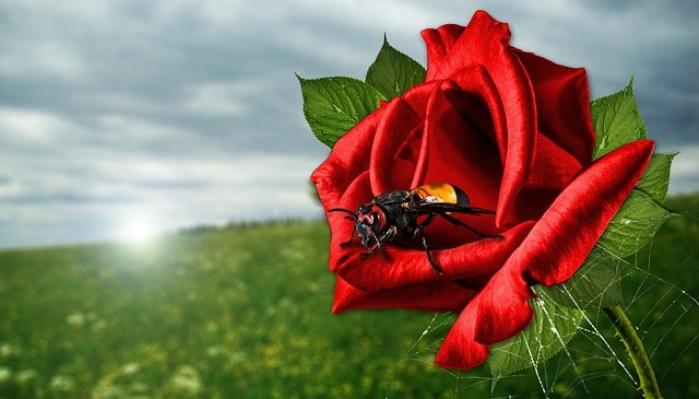 What Is the Spiritual Meaning of Hornets?